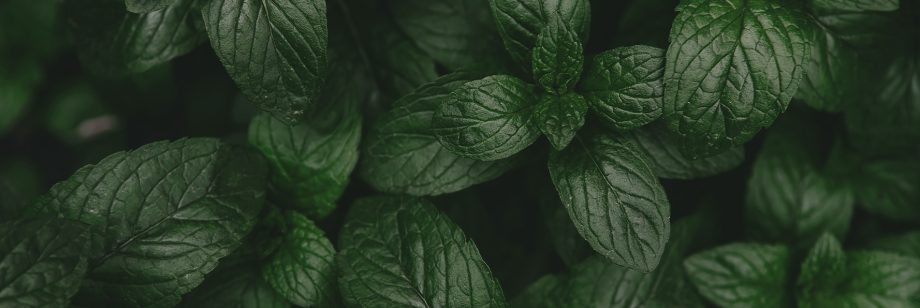 discover-infusion-mint