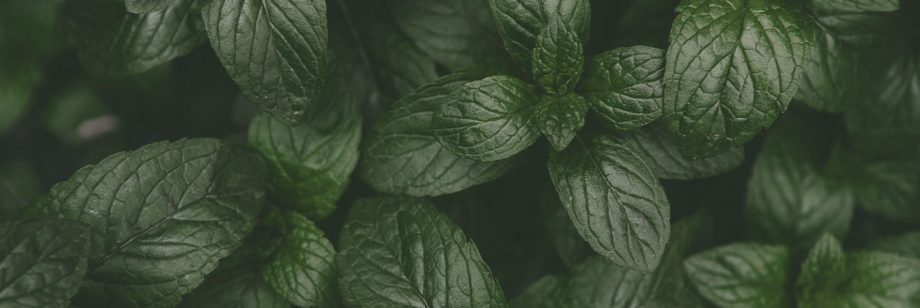 see-infusion-mint